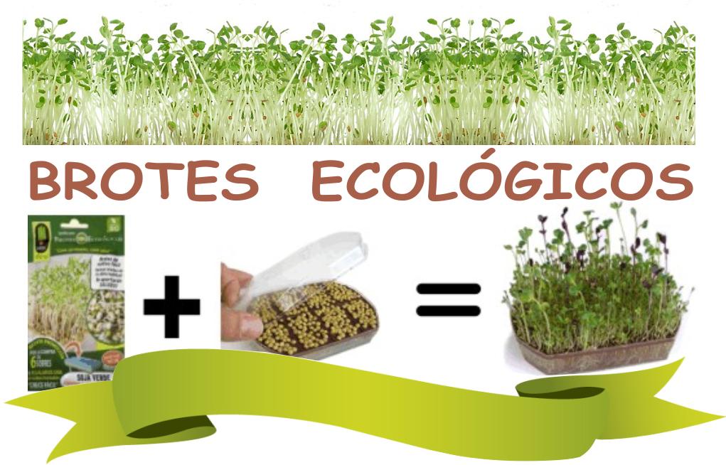 Huertos urbanos semillas ecol gicas barcelona piensos for Jardin vertical liofilizado